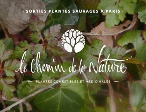 Optimisation du référencement naturel pour le site Le Chemin de la Nature